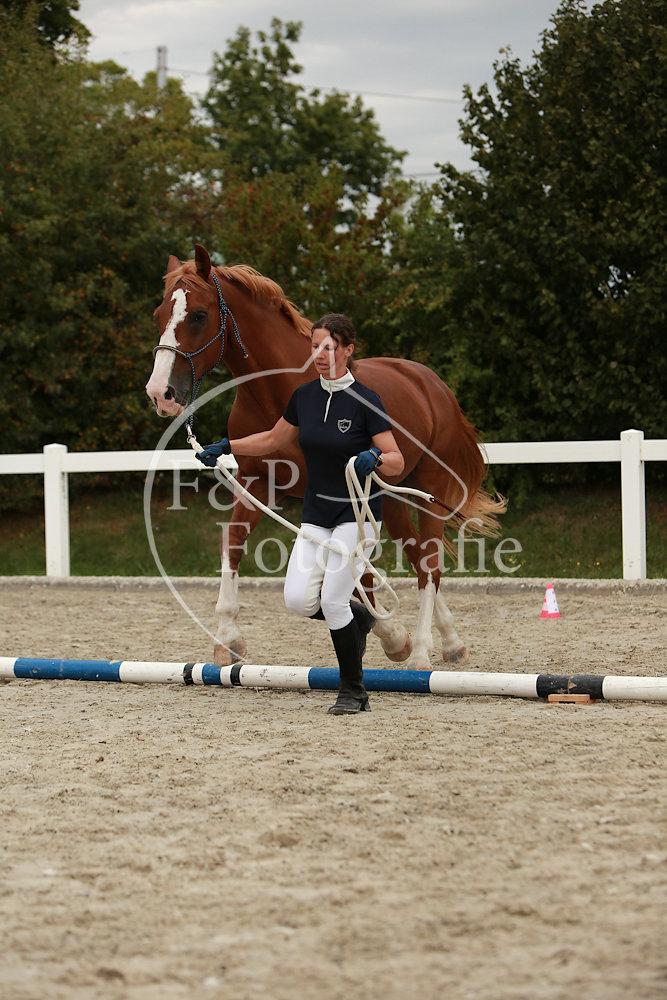 BAP P39 Stufe II Kat II Pferd