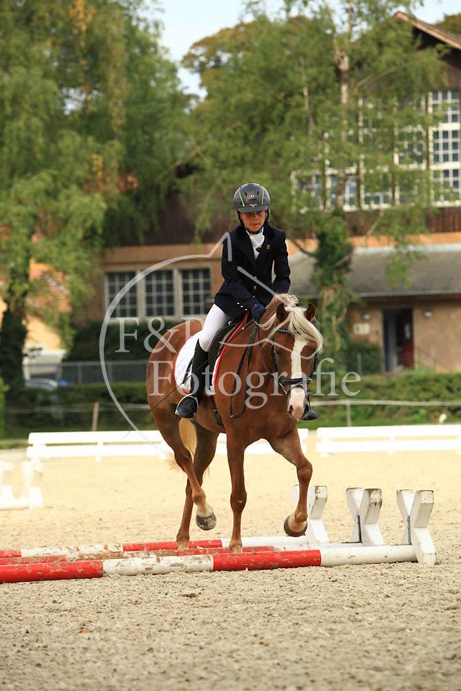 Gehorsam P11 Stufe I Pony-Pferd