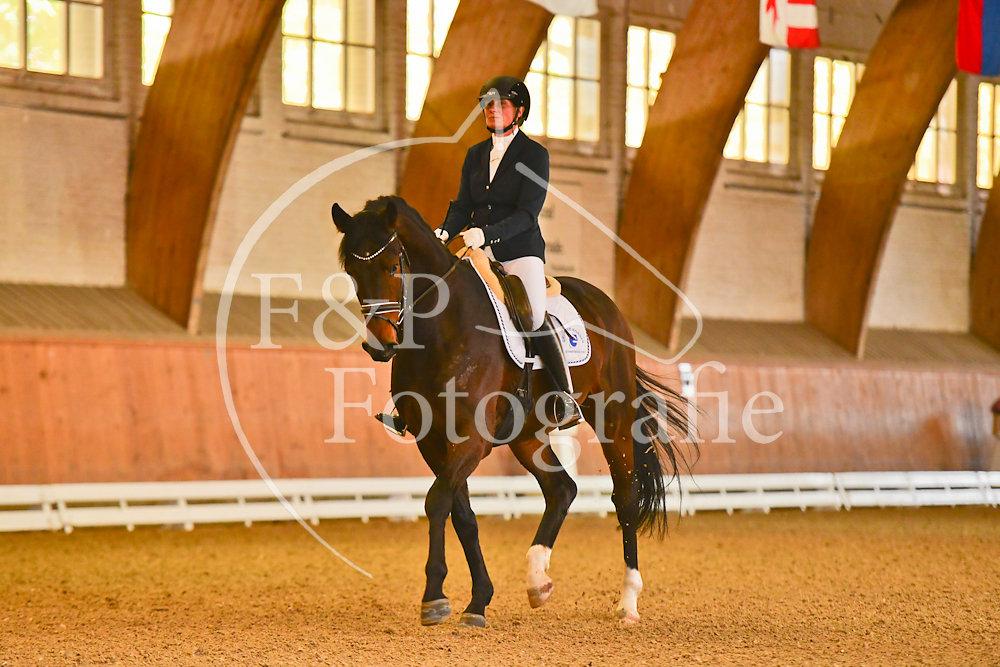 Dressur P15 Junge Pferde JP04